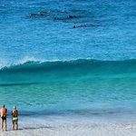 Foto de Bay of Islands B&B