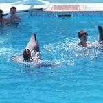 Dolphina Park Foto