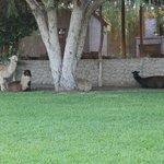 Animali nel giardino (1)
