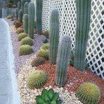 vacker kaktusodling utanför hotellet.