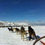 Dogsledding over Foxfonna with Irene