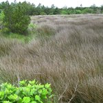 Marshy land to the east