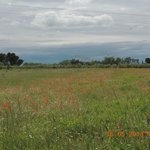 local poppie fields