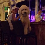 Only in Key West, a dog enjoy the Sunset Key bar