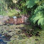 Waterfall, pond and Gunnera Manicata (like Rhubarb)