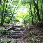 Forêt tropicale vers chez Ophélia