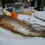 Grilled trout in Ristorante Al  Gondoliere