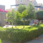 Avithos garden 3