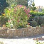 Avithos garden 2