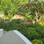 Corner of the garden