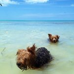 owner's doggies enjoying the beach