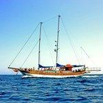 Seahorse Cruises