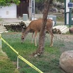 A deer outside our unit.