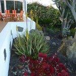 Have og del af terrasse