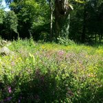Wild Flower Gardens - Kelly House Devon