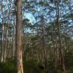 Boranup Forest: Mountain Biking