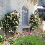 June roses at chateau mirambeau