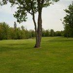 Tanglewood Marsh - Sault Ste Marie, MI