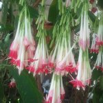 Beautiful plant specimen