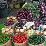 Spanish Onions Ruby Roy photo
