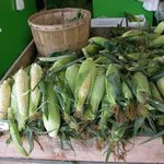Fresh local corn 30 minutes from the market. Ruby Roy photo