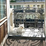 Our dog enjoying the Geneva sunshine at Tiffany