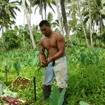 A local working in the plantation