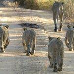 Foto de Clearwater Lodges - Kudu & Tsetshepi