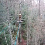 View on the treetops course