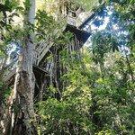 the beautiful banyan