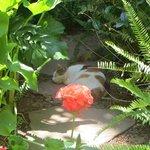 Giclette the garden cat!