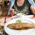 whole trout & bratkartoffel