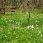 Wildflowers and bench near creek