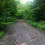 bosco a qualche centinaio di metri