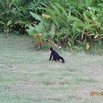 Monkey walking in the garden