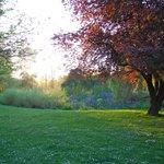 Ponds in Jericho Park