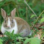 Bunny, Jericho