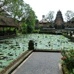 The pond with water lily