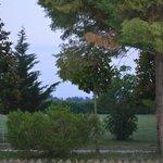 Photo of Agriturismo Torre Maestri