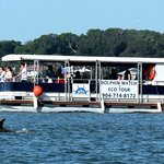 The dolphins love our boat!