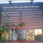 Un peu d'histoire du vin d'Alentejo, réputé être le meilleur du Portugal