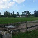 beautiful field where horse roam free.
