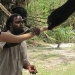 feeding howler monkey