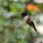 We sat at our kitchen table with a cup of coffee and watched hummingbirds every morning (fortuna