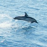 Dolphin seen on Island Hopper Trip