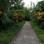 Walk way to the local village