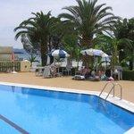 Pool & Tree bar