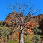 Boab's abound in Keep River NP