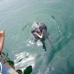 イルカのご飯タイム
