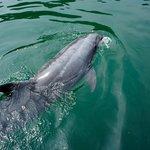 優雅に泳ぐご隠居イルカ